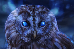 Bared Owl Wallpaper