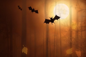 Bats Night Moon Trees Fallen Leaves