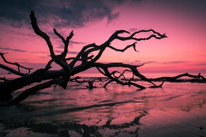 Beach Trees Wallpaper