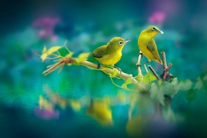 Beautiful Birds Wallpaper