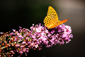 Beautiful Butterfly 4k