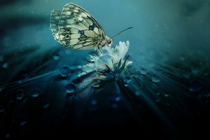Beautiful Butterfly Nature Wallpaper