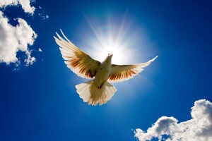 Beautiful Dove Rising to Sky Wallpaper