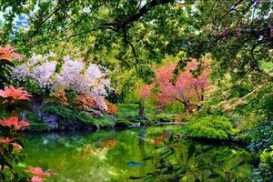 Beautiful Garden Nature