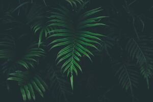 Big Leaves Cool Temperature 5k Wallpaper