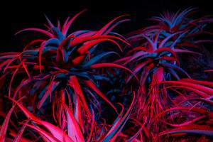 Big Sur Night Succulents 5k Wallpaper
