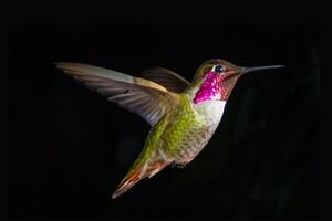 Bird Digital Art Wallpaper