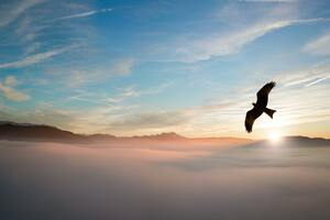 Bird Flying Over Clouds 4k Wallpaper
