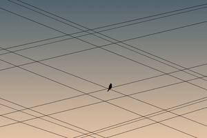 Bird On Power Lines Wallpaper
