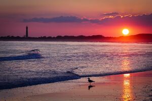 Bird Sea Shore Sunset 4k Wallpaper