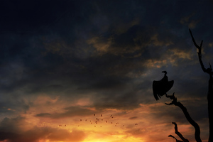 Bird Silhouette Skyscape Wallpaper