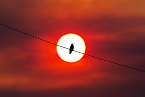 Bird Silhouette Sunset 4k Wallpaper