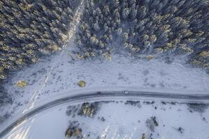 Birds Eye Aerial View Of Road Trees Winter 4k