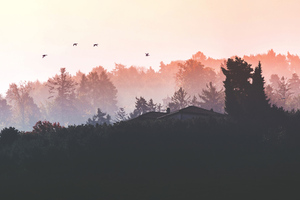 Birds Flying Back Home 4k Wallpaper