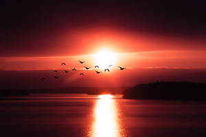 Birds Flying Over Body Of Water 4k Wallpaper