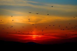 Birds Flying Towards Sunset 4k 5k