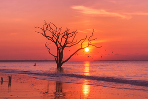 Birds Ocean Sunset Tree Wallpaper