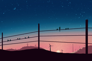 Birds Sitting On Powerline 4k