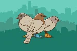 Birds Wearing Shoes Minimalist 4k Wallpaper