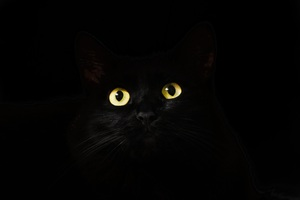 Black Cat Eyes Dark 5k