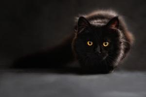 Black Cat Glowing Eyes 4k