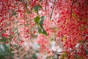 Blossom Bokeh Garden