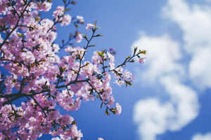 Blossom Flowers 5k Wallpaper
