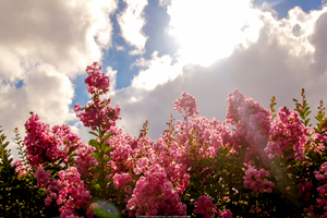 Blossom Flowers Field 5k Wallpaper