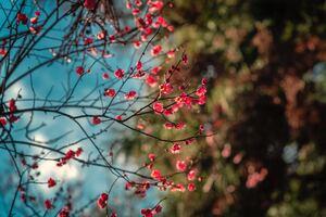 Blossom Petal Flowers 8k