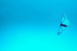 Blue Butterfly 4k