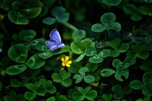 Blue Butterfly Clover 4k Wallpaper