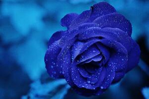 Blue Flower 4k 5k