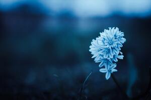Blue Petal Flowers Wallpaper