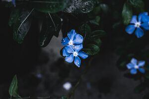 Blue Plant Flower