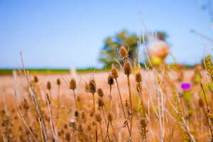 Bokeh Field Crops 5k Wallpaper
