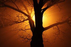 Branch Tree Sunbeams 4k