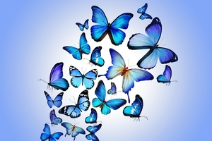 Butterfly Art Wallpaper