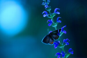 Butterfly Blue Flowers Wallpaper