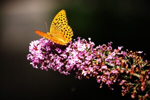 Butterfly In Garden Wallpaper