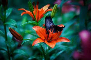 Butterfly Macro 4k