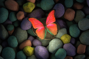 Butterfly On Rocks 4k Wallpaper