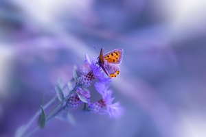 Butterfly Purple Flower