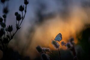 Butterfly Sitting On Plant 5k Wallpaper