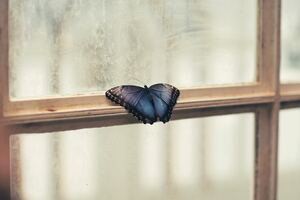 Butterfly Sitting On Window Side 5k Wallpaper