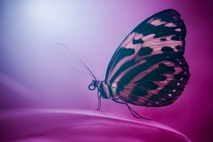 Butterfly Wings Macro Wallpaper