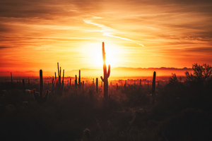 Cactus Field Sunset 4k