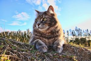 Cat 4k
