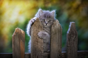 Cat Fence Pawn Wallpaper