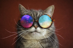 Cat Glasses Party Cool Painting Wallpaper
