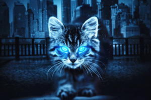 Cat 1920x1080 Resolution Wallpapers Laptop Full Hd 1080p